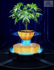Cây bonsai bay lơ lửng vân gỗ Đen – Home and Garden