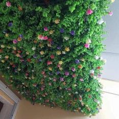 5 Tấm cỏ treo tường TAI CHUỘT HOA
