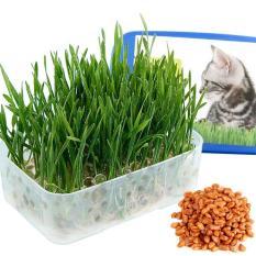 Bộ trồng cỏ cho mèo TT