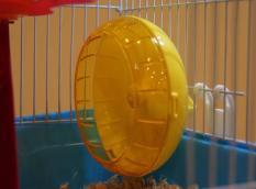 Wheel chạy dành cho Hamster