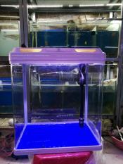Hồ cá nhập khẩu kích thước 39*27*45cm (đã trang bị đèn, máy lọc, nắp hồ)