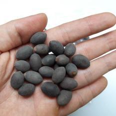 Hạt giống sen mini Nhật Bản (gói 15 hạt)
