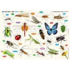 Bảng Gỗ Núm Nhựa Cùng Con Chơi Và Học – Côn Trùng – Insects