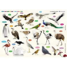 Bảng Gỗ Núm Nhựa Cùng Con Chơi Và Học – Các Loài Chim – Birds