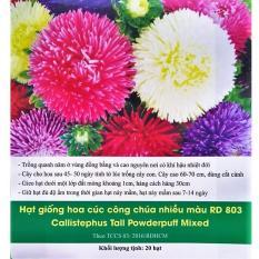 Hạt giống Cúc Công Chúa Nhiều Màu Hà Lan R803 _KLT 20 hạt .