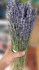 Hoa lavender khô trang trí bó khủng 250g-500g-1000g (Pháp)
