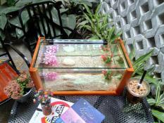 Bể cá mini khung gỗ để bàn