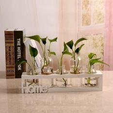 Sét 5 bình hoa lọ hoa kèm khung gỗ siêu sang chảnh