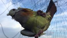 30m Lưới bẫy chim cu, cò, két mỏ đỏ ( 1 tấm lưới mắt 7 phân dài 30m 4 dây 3 túi cao 5.5m đã thắt chống gió đã nhuộm tàng hình hàng thái lan )