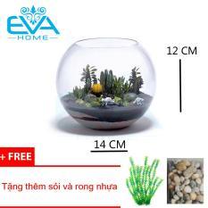 Bể cá chậu cây thủy tinh 14CMx12CM ( Tặng kèm bịch sỏi và bịch rong biển )