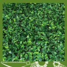 Thảm cỏ nhân tạo ốp tường – xà lách xoong GreenNetworks