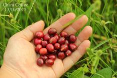 Cà phê nguyên chất rang mộc Chậm Coffee – Yêu Thương 250g