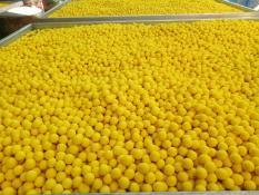 Viên tinh nghệ mật ong chăm sóc hệ tiêu hóa 500gr Bảo Nam