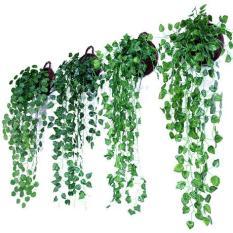 Chùm dây leo trang trí – dây Ivy rủ không kèm giỏ