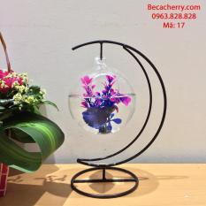 Bể cá mini cung trăng 17 ( Tặng kèm combo phụ kiện trang trí )