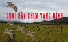 Lưới bẫy rẽ giun, bẫy tổng hợp các loại chim dài 20m cao 6m đã làm đầy đủ và thắt chống gió, hàng thái lan mua về chỉ việc sử dụng