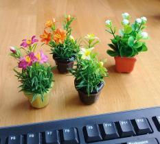 Combo 4 chậu hoa siêu nhỏ xinh xắn trang trí lung linh