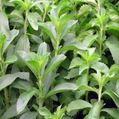 Cỏ ngọt – đường tự nhiên 500g