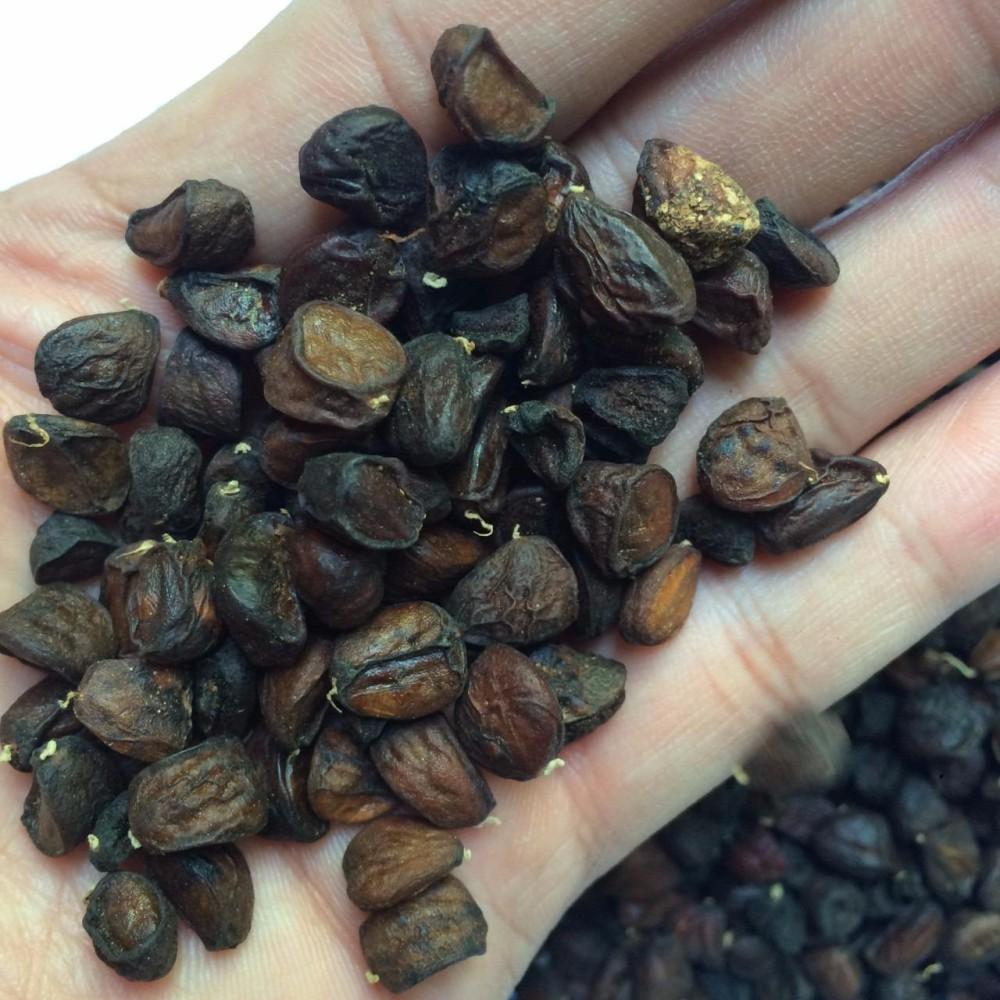 Hạt dổi nếp rừng dùng thử (16 hạt)