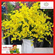 10 cành hoa lan vũ nữ màu vàng hoa lụa, hoa giả trang trí, hoa giả trang trí phòng khách, hoa giả treo tường, hoa giả, hoa giả để bàn, hoa silicon, hoa giả cao cấp, cây hoa giả MS 25 – Lanion House