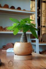 Chậu gỗ trồng cây dáng tròn độc đáo, cây nội thất, cây văn phòng, cây phong thủy- chưa bao gồm cây