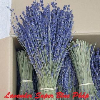 Bó 100 Cành Hoa Oải Hương Lavender Supper Blue