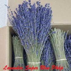 Chi tiết sản phẩm Bó 100 Cành Hoa Oải Hương Lavender Supper Blue