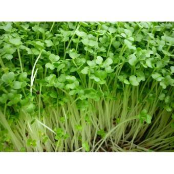 Bộ 3 gói hạt giống Rau mầm cải ngọt trắng - 8255272 , LU297HLAA1V5DXVNAMZ-3150119 , 224_LU297HLAA1V5DXVNAMZ-3150119 , 64000 , Bo-3-goi-hat-giong-Rau-mam-cai-ngot-trang-224_LU297HLAA1V5DXVNAMZ-3150119 , lazada.vn , Bộ 3 gói hạt giống Rau mầm cải ngọt trắng