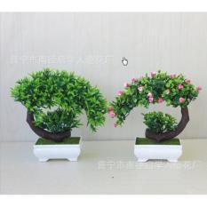 Chậu cây bonsai phú quý