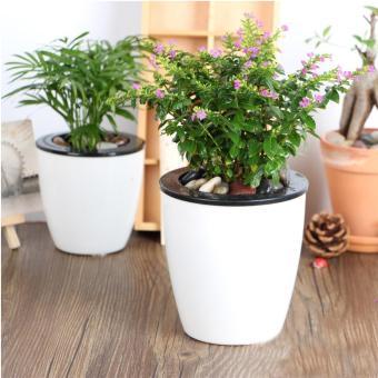 [HUGE] Bộ 3 chậu cây tự động tưới nước trắng tặng 1 gói phân trùnquế trồng cây