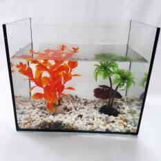Hồ Cá Vuông Để Bàn Và Phụ Kiện Trang Trí – Bể Cá Mini Để Bàn Thủy Tinh HV 18x12x15