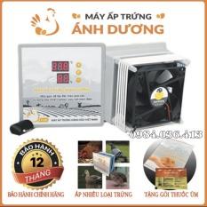 Máy ấp trứng Ánh Dương P100 – TẶNG GÓI ÚM – máy ấp mini tối đa 100 trứng- Máy đảo tay, lắp ráp vào thùng xốp