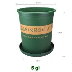 Chậu Nhựa Monrovia 5Gallon Hàng Chính Hãng (Nhập Khẩu) + Tặng Đĩa Lót