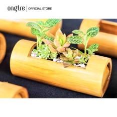 Ống tre trồng cây mini dạng treo, trang trí,… | ongtre® (Vietnam)