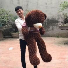 Gấu Bông Cao Cấp Teddy áo thun màu nâu chocolate khổ vải 1m4 cao 1,2m