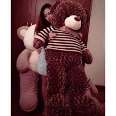 Gấu bông Teddy cao cấp – Khổ vải 1,6m cao 1,4m màu nâu