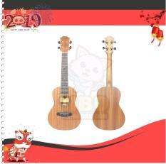 Đàn Ukulele Concert 23