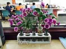 Bình hoa trang trí phòng làm việc thêm sinh động, set 5 lọ hoa kèm kệ gỗ Home, binh hoa trang tri phong lam viec them sinh dong, set 5 lo hoa kem ke go Home