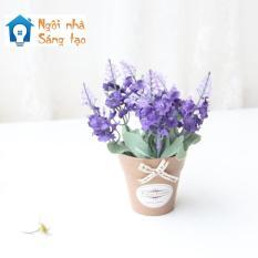 Chậu hoa Lavender mini