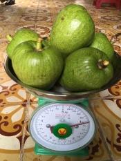 1 kg trái bình bát xanh ( kèm tài liệu sử dụng ) dùng để hỗ trợ trị bệnh bướu cổ cường giáp đau lưng nhức mỏi đau khớp