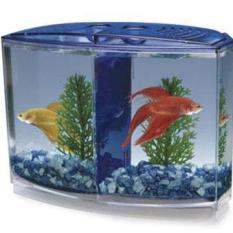 [TẶNG SỎI] Bể Cá Beta Mini – Hồ Cá Mini Để Bàn Bằng Nhựa Cao Cấp 2 Ngăn