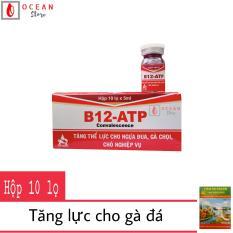 Thuốc bổ tăng lưc cho chó nghiệp vụ, gà đá – 1 Hộp Thuốc B-12 ATP 5ml (tặng 1 hộp Viên ổn thanh)