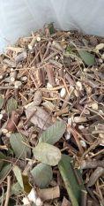 cây đuôi chồn khô (1kg)