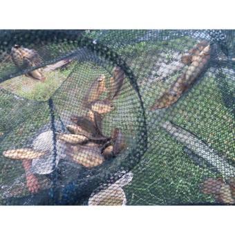 Lưới bát quái bắt cá tôm 12 lỗ-tặng kèm thính mồi