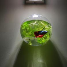 Bể cá mini , Chậu thủy tinh treo tường 15cm