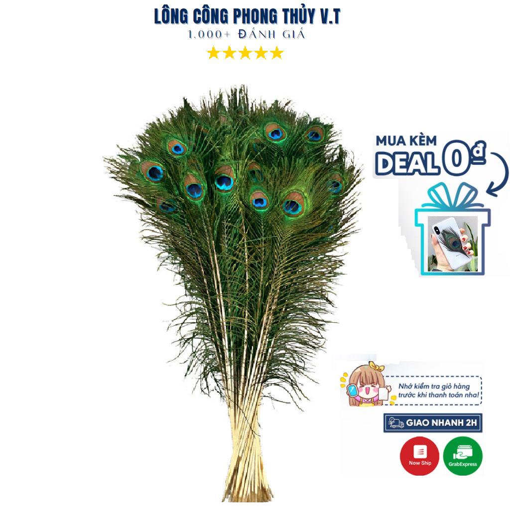 [Rẻ Nhất Lazada] Lông Công Phong Thủy 🔥FREESHIP🔥 Chiều Dài 25-90cm Hàng Loại Đẹp