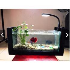 Bể cá mini văn phòng để bàn ( tặng kèm phụ kiện : đá + cây nhựa)