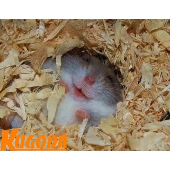 Mùn cưa nén 1kg Kugoda lót chuồng cho hamster và thú nhỏ - kgd0223