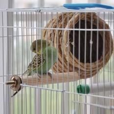 Loài Chim mới Gỗ Nguyên Cây Cầu Vẹt Con Vẹt Đồ Chơi Chim Paw Mài cho lồng Chim-quốc tế
