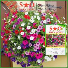 Hạt giống hoa Dạ Yến Thảo Sao Thần Nông Mix nhiều màu nhanh ra hoa đề kháng khỏe 100 hạt